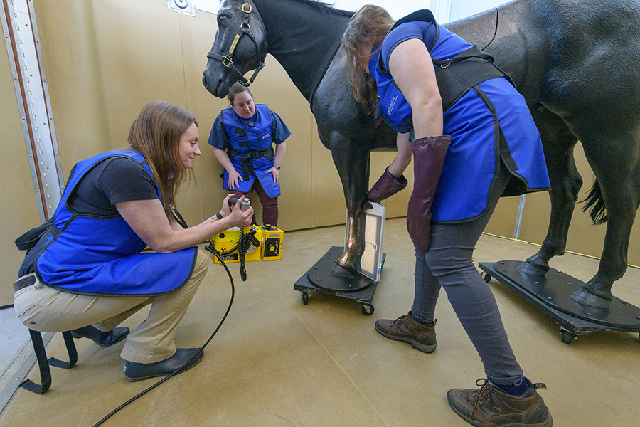 students using equipment to examine a model horse